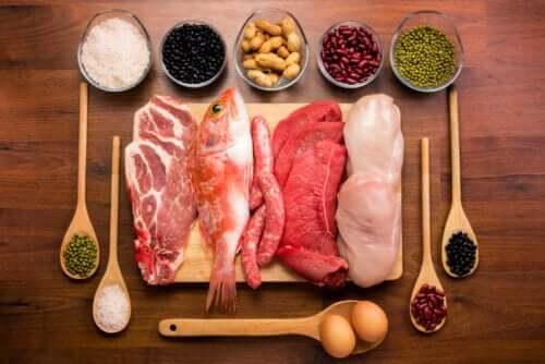 Actions et fonctions des protéines dans le corps