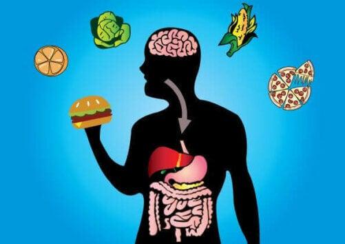 La résistance à l'insuline et la flexibilité métabolique.