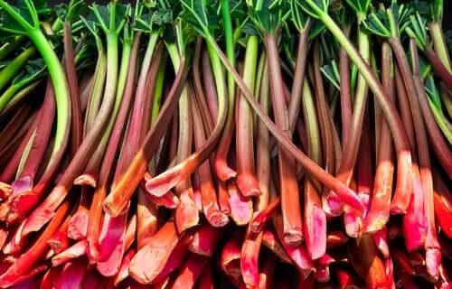 Les bienfaits de la rhubarbe.