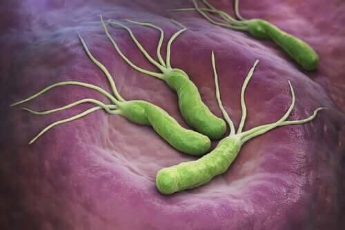 Helicobacter pylori et le cancer : sont-ils liés ?