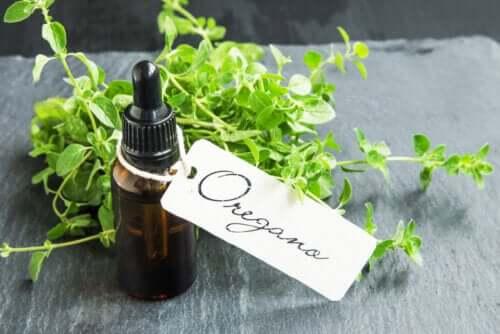 Les bienfaits de l'huile d'origan maison