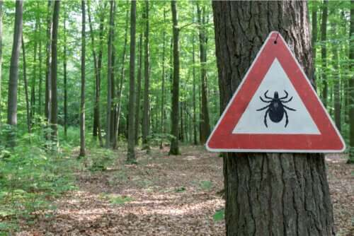 Traitement de la maladie de Lyme