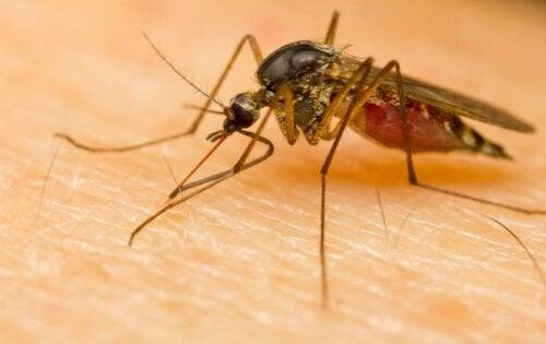 Une piqûre de moustique.