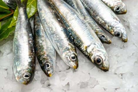 Des sardines crues.