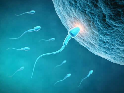 L'influence de l'alimentation sur la qualité du sperme