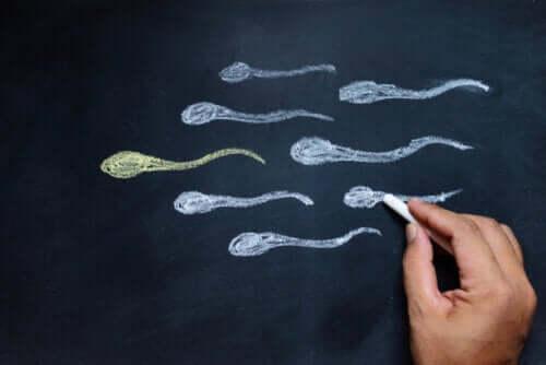 6 moyens d'augmenter la testostérone