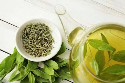 Le thé vert peut-il augmenter la longévité ?