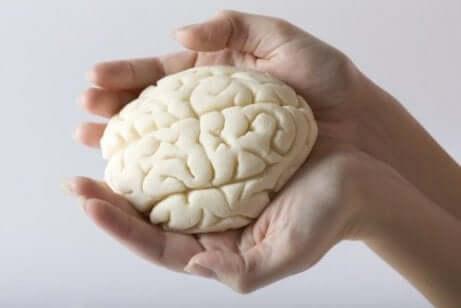 Un cerveau miniature.