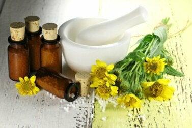 Arnica : avantages, utilisations et contre-indications