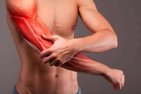Les muscles du bras d'un homme.