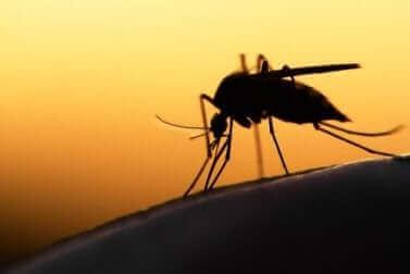 Le paludisme et le moustique.