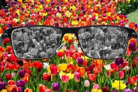 Des fleurs avec daltonisme.