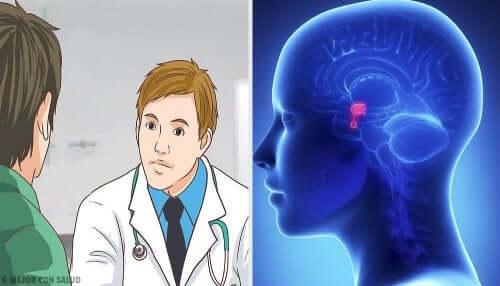 Les maladies de la glande pituitaire.