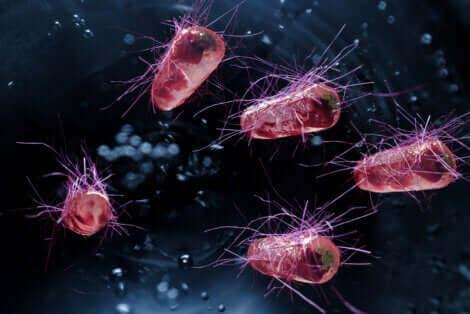 Des bactéries sur fond noir.