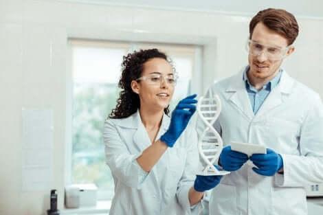 Deux chercheurs scientifiques étudiant l'ADN.
