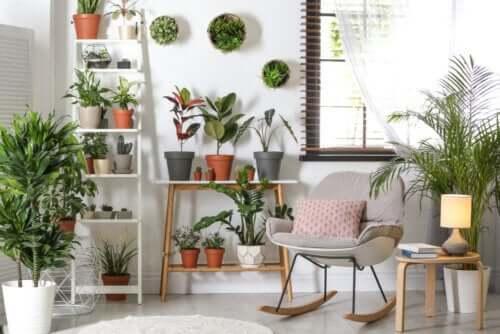 Plantes résistantes qui requièrent peu d'entretien