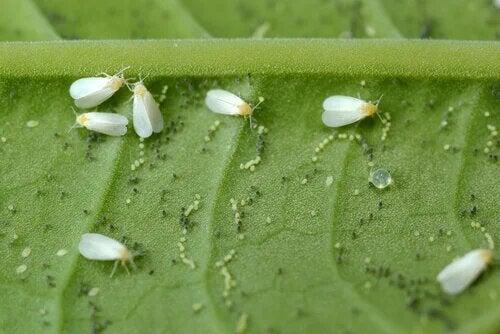 Les ravageurs et maladies des plantes peuvent aussi apparaitre sous la forme d'insectes destructeurs