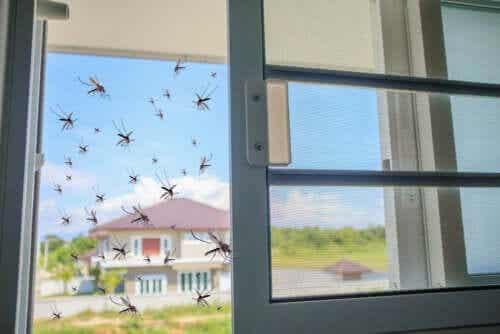 Le basilic comme remède naturel contre les moustiques