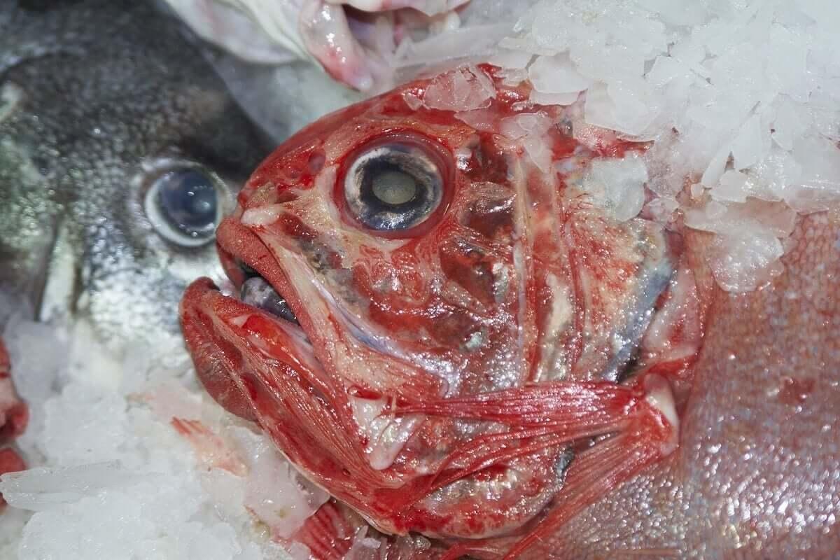 Des poissons frais à consommer.