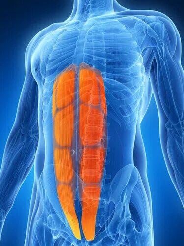 Qu'est-ce qu'une tension abdominale latérale ?