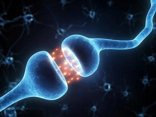 L'activité neuronale dans le cerveau.