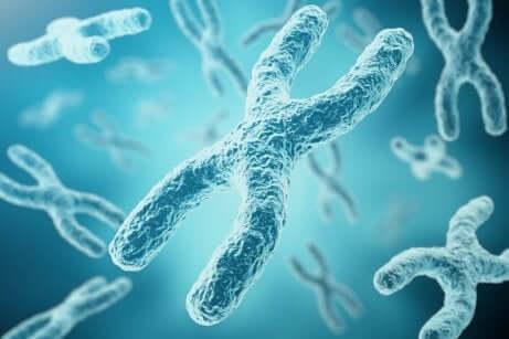 Des gènes sur une image.