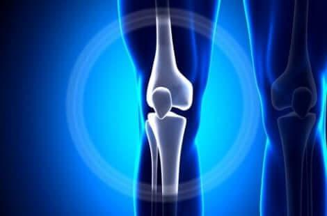 Les os du genou.