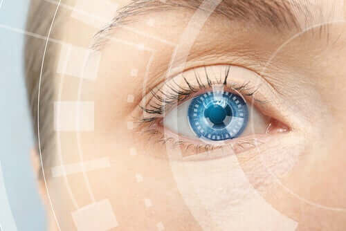 Anatomie de l'œil.