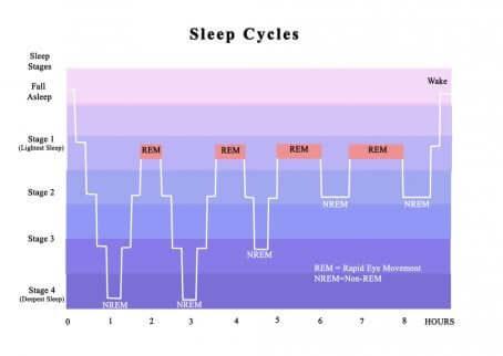 Les cycles du sommeil en schéma.