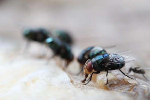 Des mouches sur une surface.
