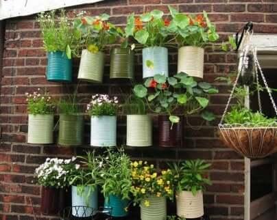 Pots de plantes contre un mur.
