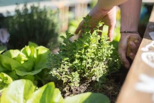 Conseils pour cultiver des plantes sur la terrasse
