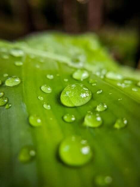 Des gouttes de pluie sur une feuille.