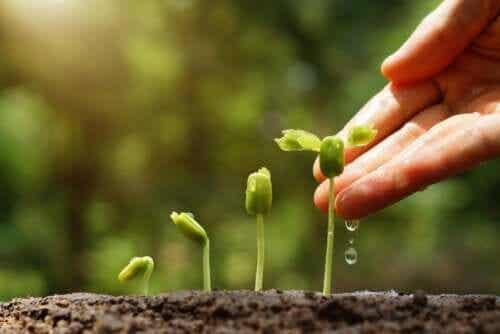 6 conseils pour un jardin durable