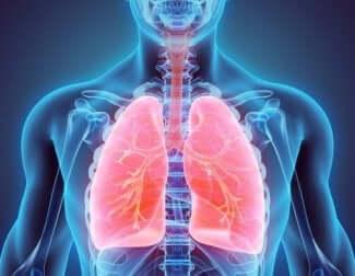 Les poumons d'une personne.