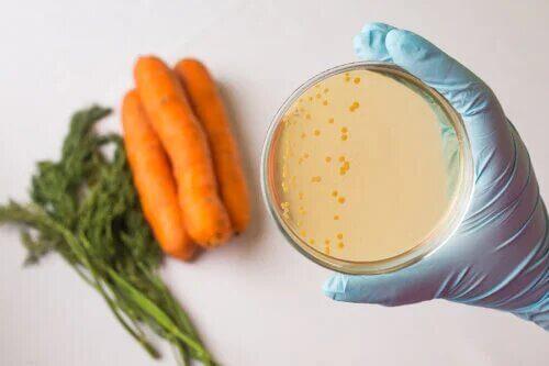La sécurité alimentaire : en quoi consiste-t-elle ?