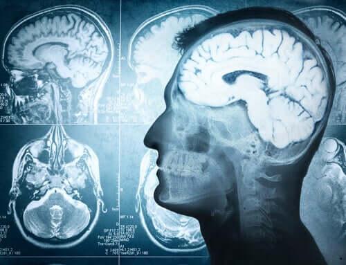 Les parties du cerveau et leurs fonctions