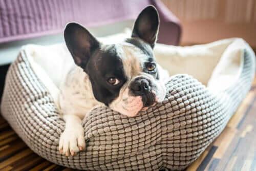 5 idées pour faire la maison de votre animal de compagnie