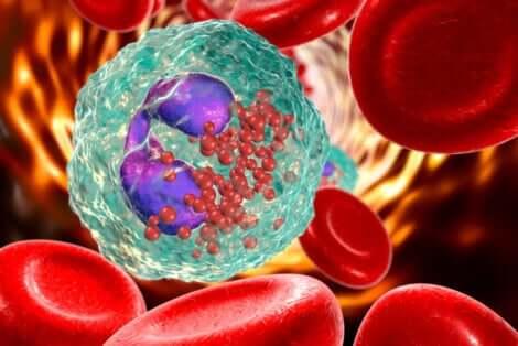 Globules rouges et blancs.