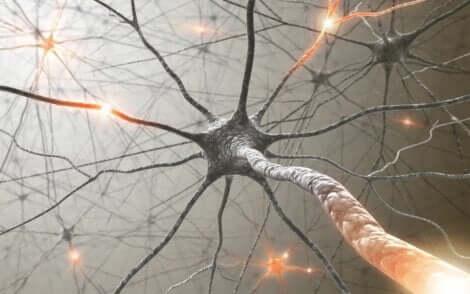 Un neurone dans un nerf.