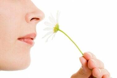 Hyperosmie, l'hypersensibilité aux odeurs