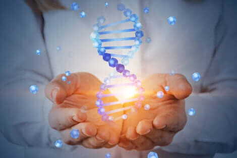 Des mains tiennent de l'ADN.