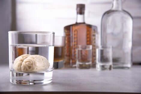 Un petit cerveau dans un verre d'alcool.