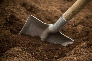 Types et caractéristiques des sols de jardin