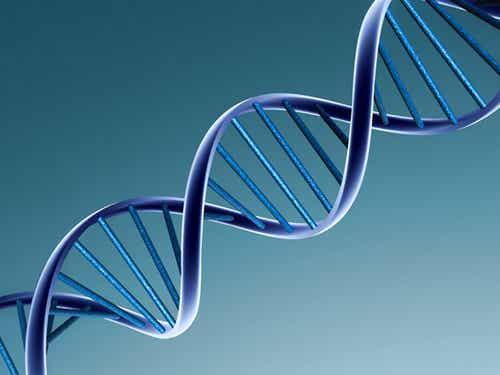 La structure de l'ADN en image.