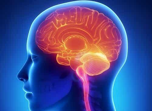 Un cerveau humain.