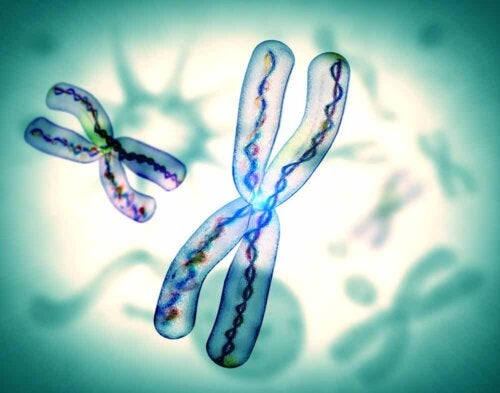 Un chromosome.