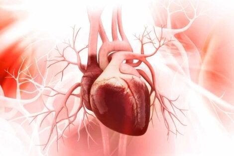 Un cœur humain.