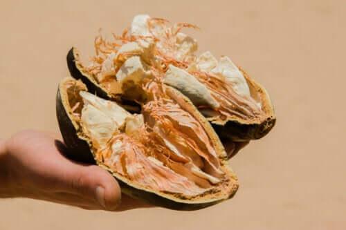 Fruit du baobab ou pain de singe : caractéristiques, bienfaits et contre-indications