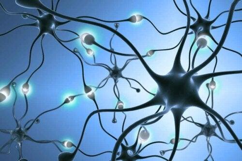 Création de nouveaux neurones.
